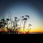 Perfect timing for a breathtaking #sunset outside of morro bay. #silhouette #ocean