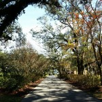 Entrance path to oak alley plantation  #trees #green #path