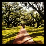 Oak alley entrance pathway. 300 year old oaks. They live to at 600 years! #green #path #trees #nature #plantation #Louisiana